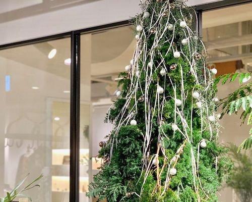 クリスマスツリー?.jpg