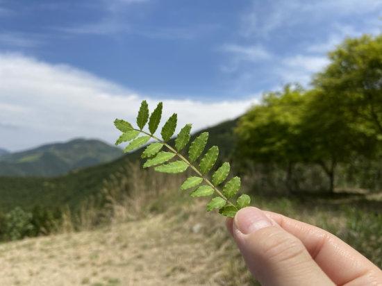 木の芽[1].jpg